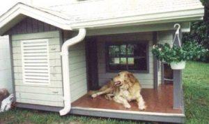 cuccia riscaldata per cani