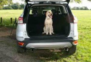 divisorio auto per cani