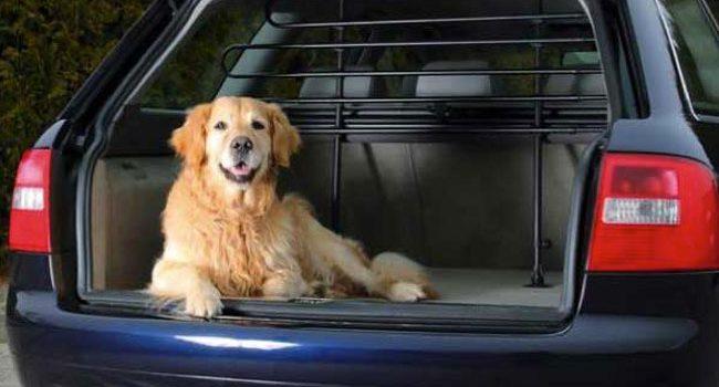 miglior divisorio auto per cani