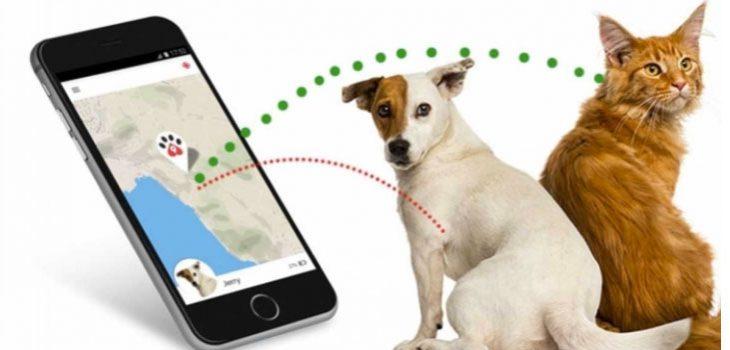 miglior localizzatore gps per cani
