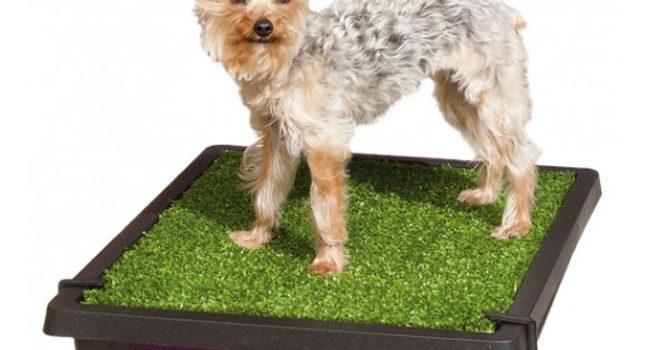 miglior lettiera per cani