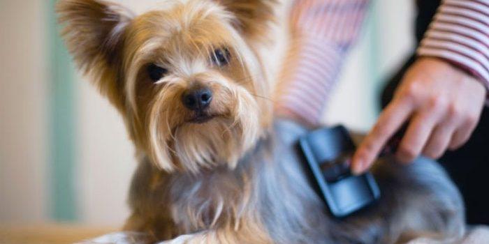 miglior slanatore per cani