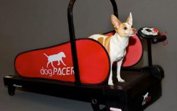 tapis roulant per cani migliori