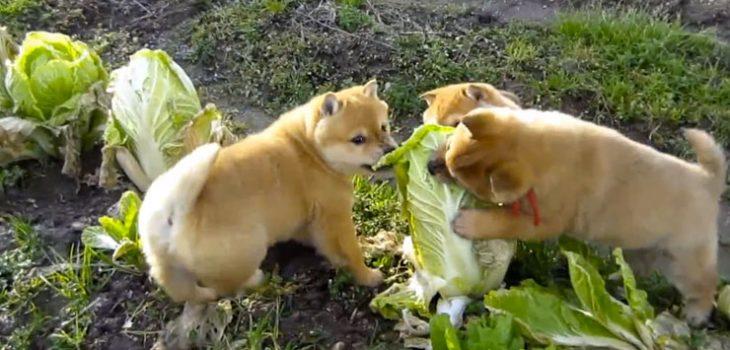 migliori repellenti per cani