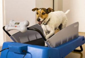 tapis roulant per cani