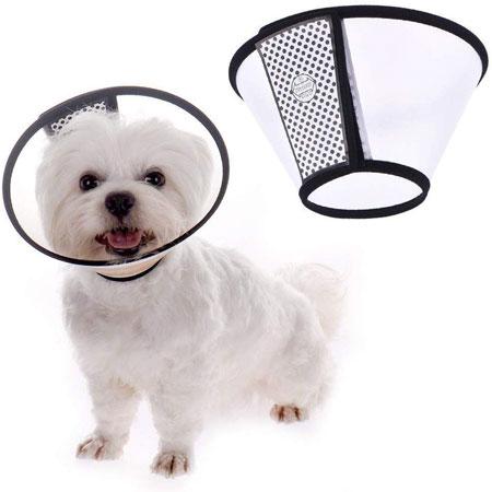 collare elisabettiano per cani migliore
