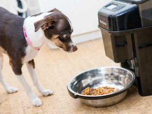 distributore di cibo per cani