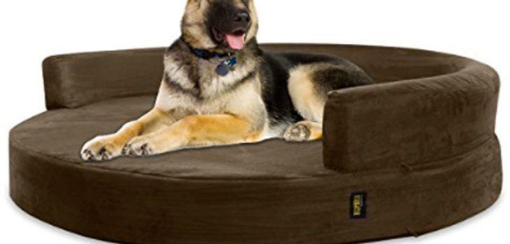 miglior divano per cani