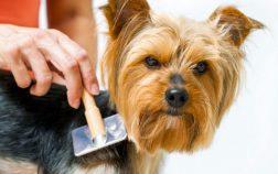 spazzola per cani migliore