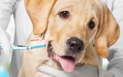 miglior spazzolino da denti per cani