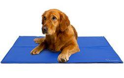 miglior tappetino refrigerante per cani