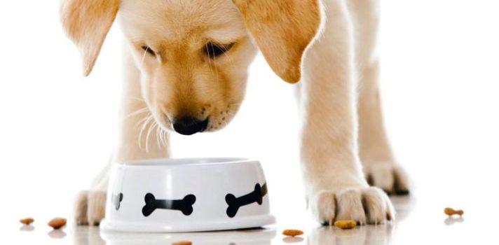 migliori crocchette light per cani