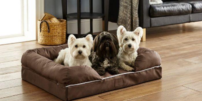 migliori lettini per cani