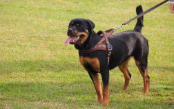 pettorine per cani migliori