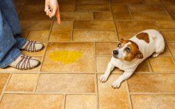 migliori traversine per cani