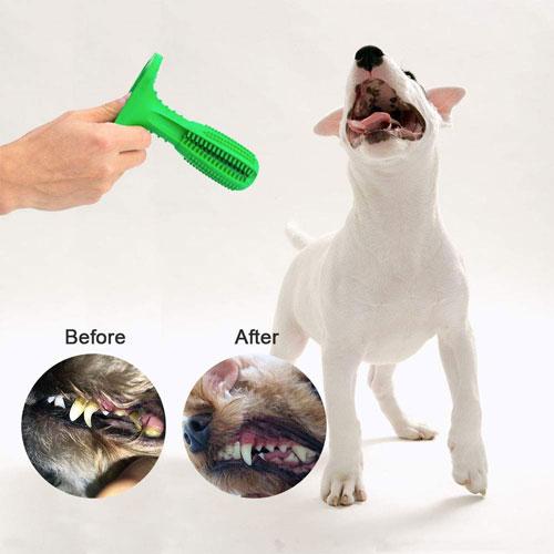 spazzolino da denti per cane migliore